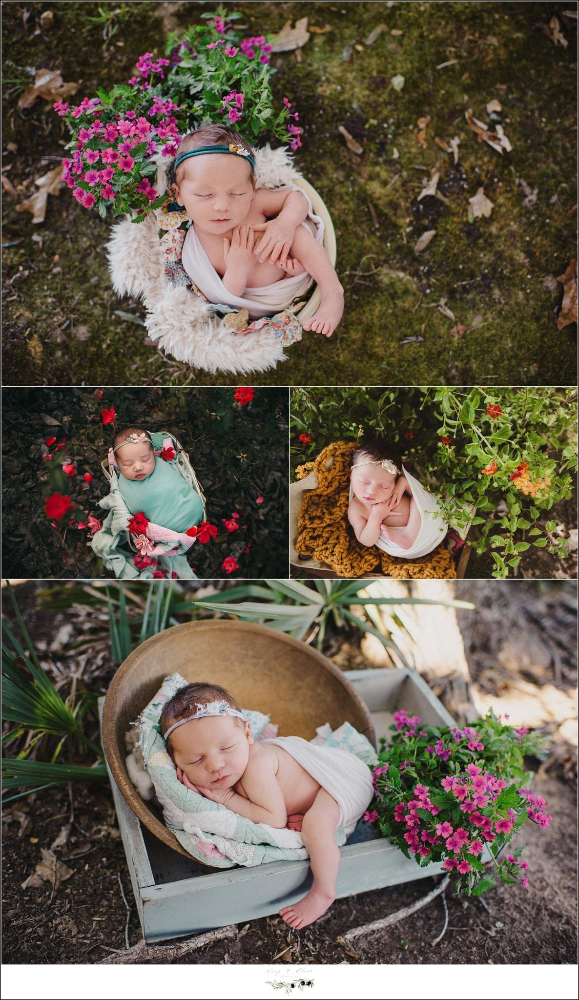 Twig and Olive Newborn Photography